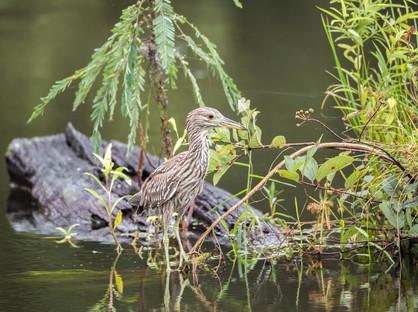 Heron Savannah, GA