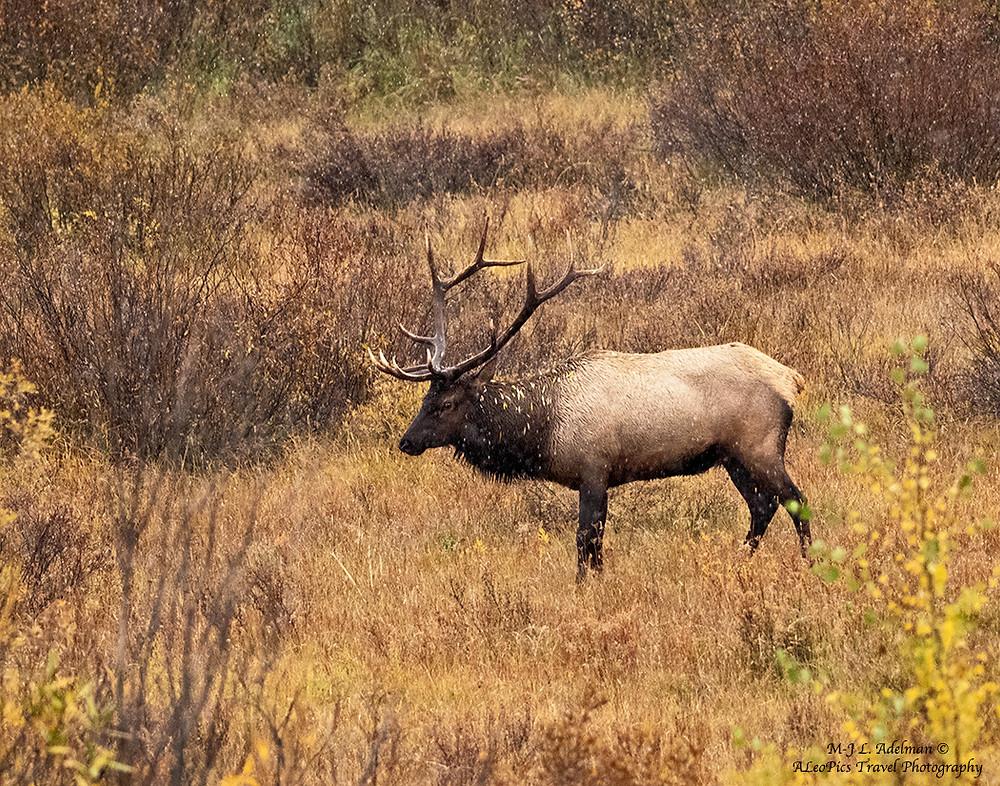 Fall wildlife photography workshop grand teton national park tripod travelers
