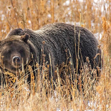 Tripod Travelers Wildlife Photography Vacations
