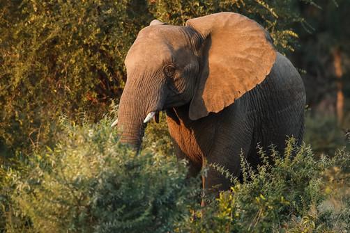 Elephant Cheetah South Africa Photography Workshop Safari