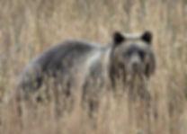 Grizzly Cub Grand Teton National Park Photo Workshop