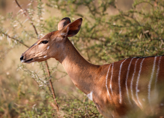 Kudu Cheetah South Africa Photography Workshop Safari