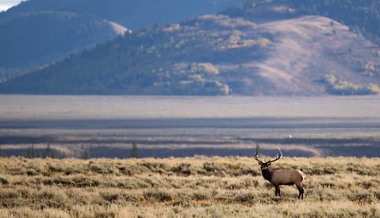 Elk wildlife photography workshop