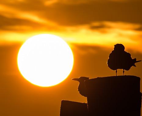 sunset Naples Florida