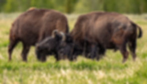 Grand Teton national park photograhy workshop