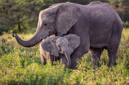 Tanzania Wildlife Photography Workshop