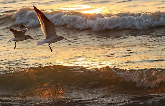 Gulls Sanibel Island Florida