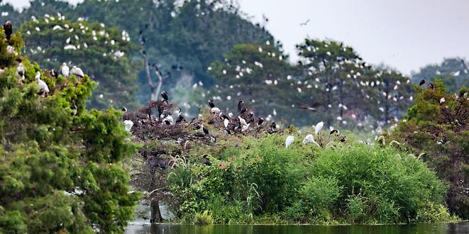 Birds Savannah GA