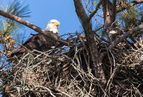 Eagle nest Photography Workshop
