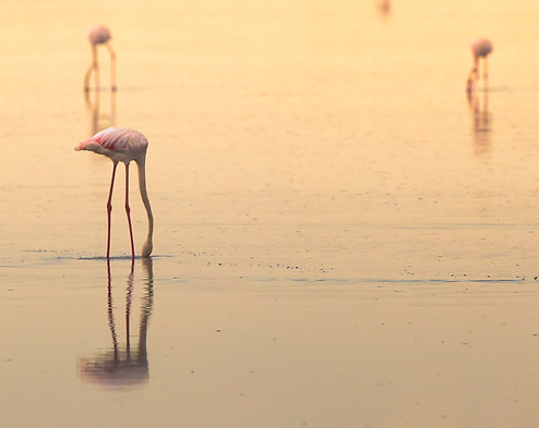 Flamingo Tanzania Photography Safari