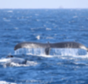 humpback whale Maui Photography workshopl