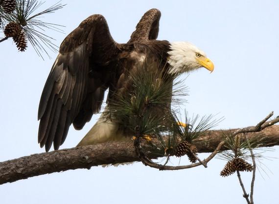 Eagle  Wildlife Photography Workshop
