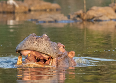 Hippo South Africa Photography Workshop