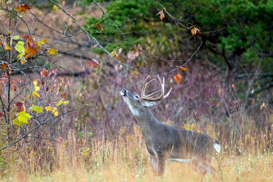 Cades cove Smoky Mountains Buck Fall
