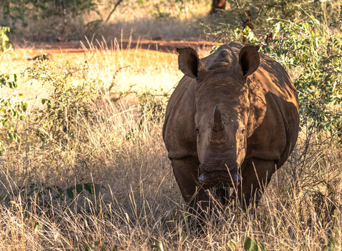 Rhino South Africa Photography Workshop