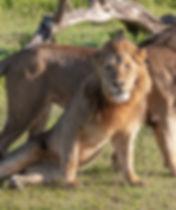 Tanzania Photography Safari