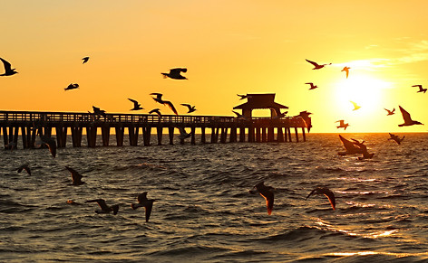 Sunset with Birds Naples Pier Florida