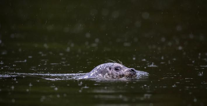 Seal British Columbia