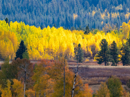 Fall in the Grand Tetons Photography Workshop, 2019