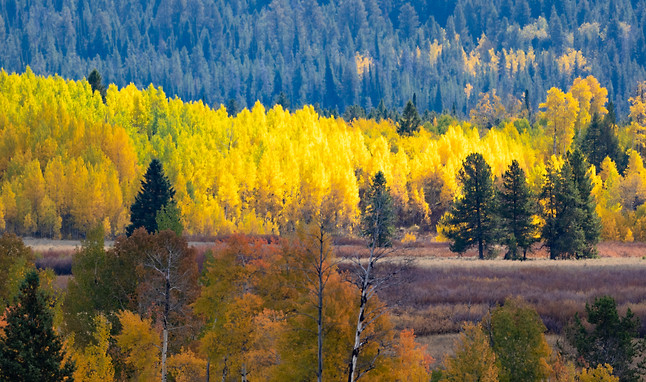 Fall Grand Teton photography workshop
