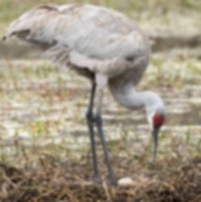 Florida Wildlife Photogrphy Workshop