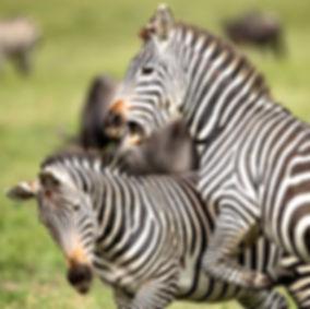 Tanzania wildlife Photography Safari