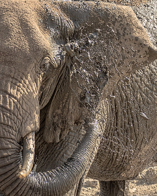 Elephant Mud Tanzania Photography Safari