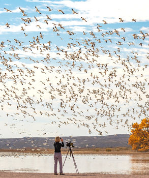Bosque Del Apache Phoography Worksop