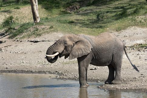 Elephant Tanzania Photography Safari