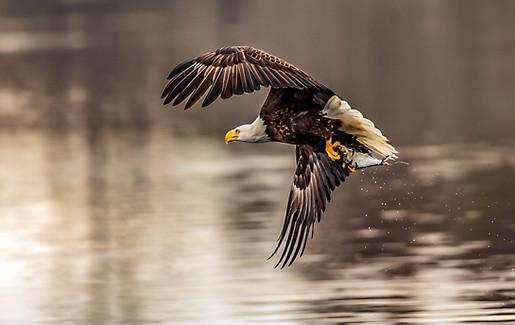 Eagle Fishing FLorida