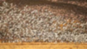 Bird Blast Off Bosque Del Apache Photography Workshop