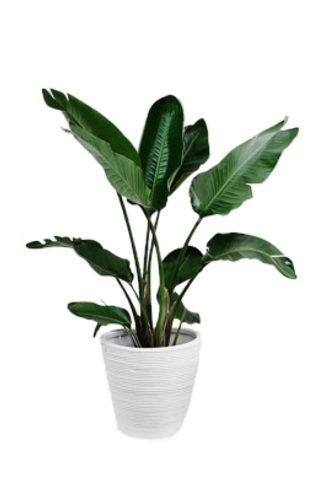 5094099-potted-plant-png-potted-plant-ca
