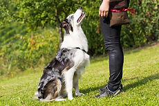Hearts and Hounds | Vancouver, British Columbia | Day Training Sessions for Dogs