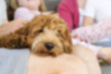 Puppy at home with loving family