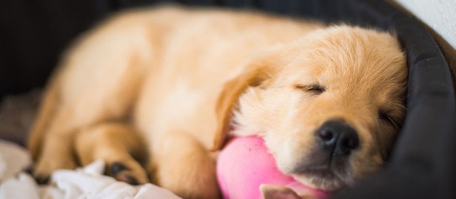 Top 10 Tips for New Puppy Parents