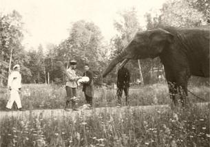 «Бледнокирпичные болотные слоны Петербурга». Жизнеописание столичных царских слонов.