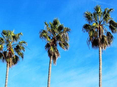 City Guide: San Diego, California
