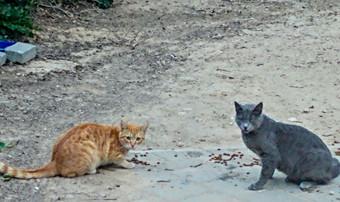 איך להיות חתול רחוב שמאלני?