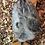 Thumbnail: Olive Egger Chicks