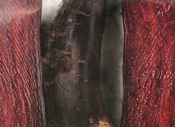 Beet cylindara formanova