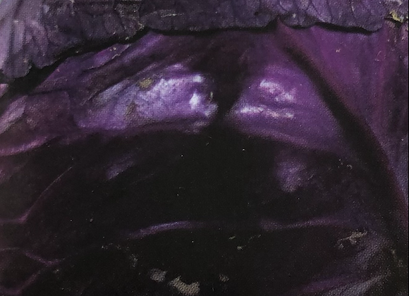 Cabbage Tete noir
