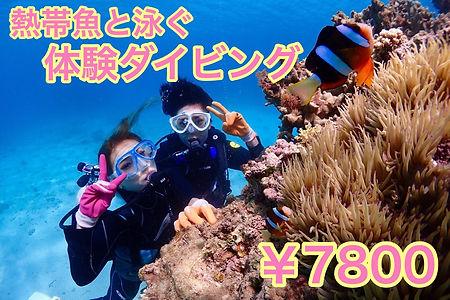 熱帯魚体験.jpg