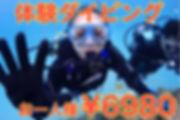 沖縄 熱帯魚 体験 ダイビング