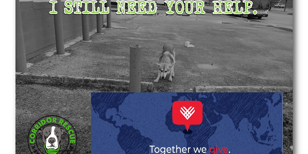 Giving Tuesday with Corridor Rescue