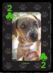 Spades Q_Clubs 4-2.png