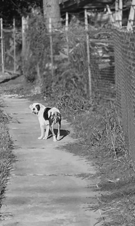 sidewalk-dog.png