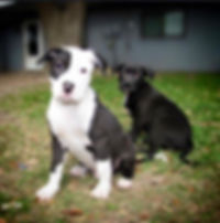 Oreo and Comet 2016-02-20 LWelch.jpg