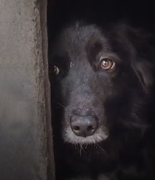 After a decade helping homeless animals get off the streets, Corridor Rescue, which focuses on some of the worst neglect cases in our area, needs the community's help.