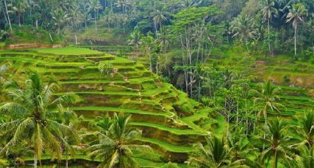 Onthaasten op Noord-Bali