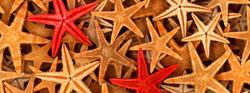 website_étoile_de_mer_